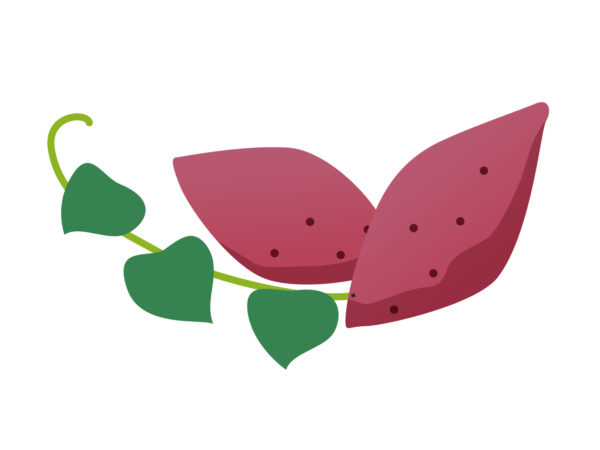 サツマイモの品種も色々